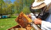 Объявление Продаю ПАСЕКУ в Алтайском крае