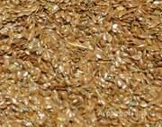 Объявление Закупаем лен масличный в Алтайском крае