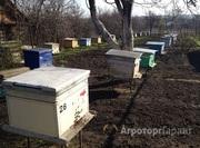 Объявление Пчелосемьи в Алтайском крае