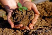 Объявление Продам участки земли сельхозназначения в Алтайском крае