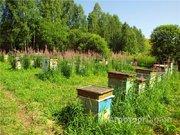 Объявление Продам Пасеку с домом и огородом в Алтайском крае