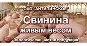 Продаю СВИНИНА живым весом в Алтайском крае