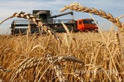 Объявление Продаю фермерское хозяйство в Алтайском крае