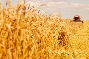 Объявление Участок сельхозназчения 103 га в Славгородском районе в Алтайском крае