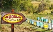 Объявление Алтайский мед, продукты пчеловодства, травяные чайные напитки в Алтайском крае