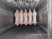 Объявление Свинина охлажденная в полу тушах   155 руб/кг в Москве и Московской области