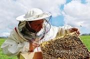 Объявление Продаю ПАСЕКУ, пчелоинвентарь в Алтайском крае