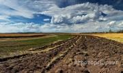 Объявление Земельный участок 3000 га сельхозназначения, склад, мехток в Алтайском крае