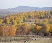 Объявление Продаю маральник (пятнистые олени) в Алтайском крае