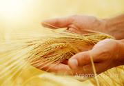 Объявление Ценный агроном в Алтайском крае