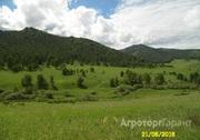 Объявление Продам 62 га земли сельхозназначения  в Алтайском крае