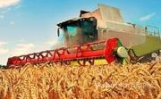 Объявление Сельхозпредпритие в Ростовской области в Ростовской области