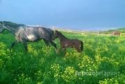 Объявление Участок 61,3 га земель сельхозназначения в Алтайском крае