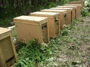 Объявление Пчелопакеты Карника, Карпатка полный пакет документов в Костромской области