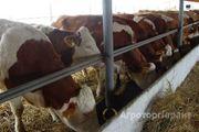 Объявление Продам ферму под развитие КРС в Псковской области