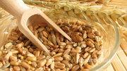 Объявление Закупаем пшеницу продовольственную в Республике Татарстан