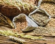 Объявление Продаем пшеницу 3 класса в Республике Татарстан