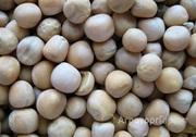 Объявление Закупаем горох продовольственный на экспорт в Тамбовской области