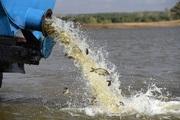 Объявление Зарыбление прудов и водоемов  в Москве и Московской области