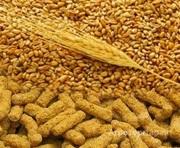 Объявление Экструдат пшеницы для кормов животных в Алтайском крае