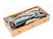 Объявление Продаем свежемороженую рыбу в Приморском крае