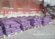 Объявление Картофель оптом от производителя Фасовка: в сетках в Республике Северной Осетии — Алании