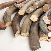 Объявление Куплю дороже всех зубы кашалота, бивни мамонта, Рога носорога по всей РФ в Москве и Московской области