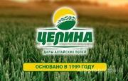 Объявление АО Целина купит ГРЕЧИХУ, ГОРОХ, ЯЧМЕНЬ для дальнейшей переработки в Алтайском крае