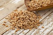 Объявление Семена озимой пшеницы Таня, Алексеич, Юка и др в Ростовской области