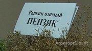 Объявление Семена озимого Рыжика Пензяк в Ростовской области