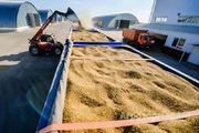 Объявление Перевозка зерна в Алтайском крае