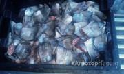 Объявление Покупаем рыбные отходы Татарстан в Республике Татарстан