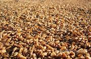 Объявление Пшеница фуражная оптом от производителя. 9000 руб/тонна. в Тамбовской области