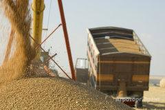 Объявление Камаз зерновоз в Алтайском крае
