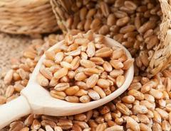 Объявление Продаем пшеницу 3,4,5 класс и ячмень в Саратовской области