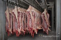 Объявление Свинина на кости охл.полутуши. в Алтайском крае