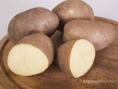Объявление Продам картофел сорта INNOVATOR (фри-съедобные) в Украине