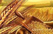 Объявление Услуги элеватора по сушке, подработке, хранению зерна в Воронежской области