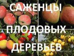 Объявление Яблоня (саженцы) в Тверской области
