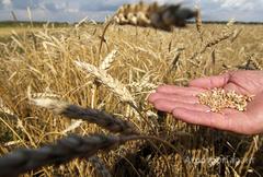 Объявление ООО НПП Волгасемресурсреализует элитные семена сельхоз культур в Самарской области