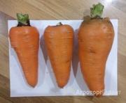 Объявление Морковь в Алтайском крае