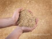 Объявление Продам пшеницу 3 класс и фураж 5 класс в Алтайском крае