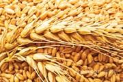 Объявление Продам зерновые  ГОСТ (крупный опт) в Алтайском крае