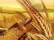 Объявление Помощь в приобретении фермерское хозяйство, сельхозземли, элеваторы и пр. в Краснодарском крае