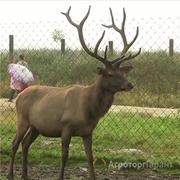 Объявление Куплю маральник или охотхозяйство в Республике Алтай