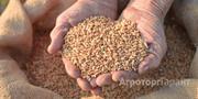 Объявление Услуги по фасовке зерновых и масличных с выездом на хозяйство в Алтайском крае