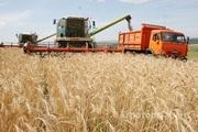 Объявление Действующее сельхозпредприятие в Алтайском крае в Алтайском крае